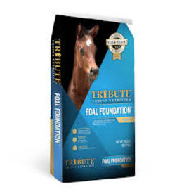 Tribute Tribute Foal Foundation