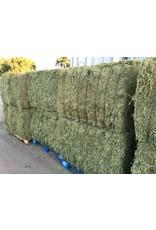 Larsen Alfalfa Large 1100lb   Pasture Block