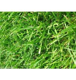 Argentine Bahia Grass Seed, lb