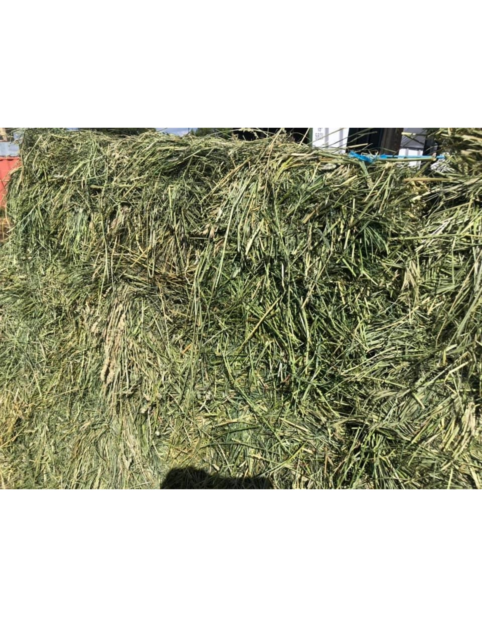 Montana O&A Heavy Alfalfa