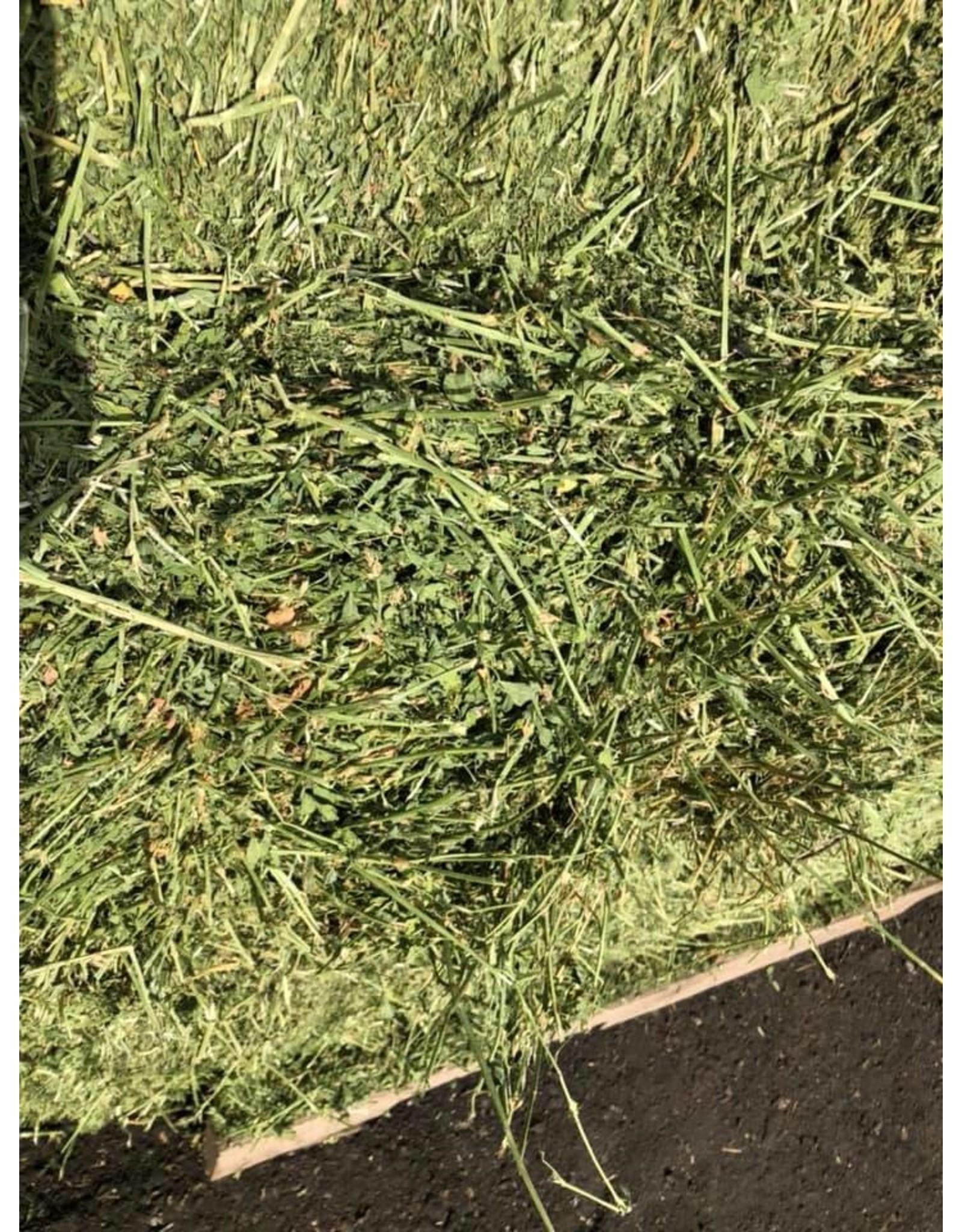 Alfalfa New Mexico 2S