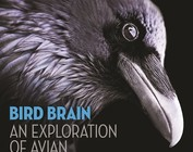 Bird Behavior & Science