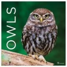 2020 Owls Calendar - TF Publishing