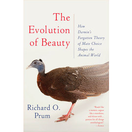 EVOLUTION OF BEAUTY, PB