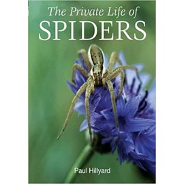 Private Life of Spiders