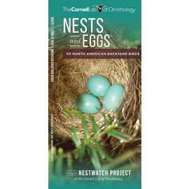 Nests and Eggs of North American Backyard Birds