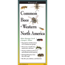 Common Bees of Western NA Folding Guide