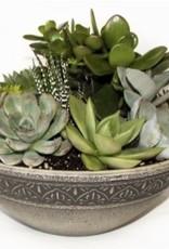 """Griffin Plants 10"""" Moroccan Bowl Succulents"""