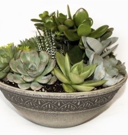 "Griffin Plants 10"" Moroccan Bowl Succulents"