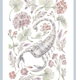 "Erica Catherine Illustration Scorpio Zodiac Sign Illustration Art Print: 8 x 10"""