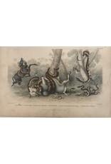 SPV Plate 68 Snake 1870