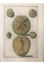SPV Green Shell Lithograph 1700s