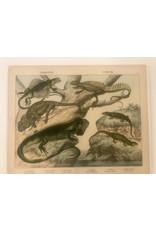 SPV Colored original Lithograph of Lizards