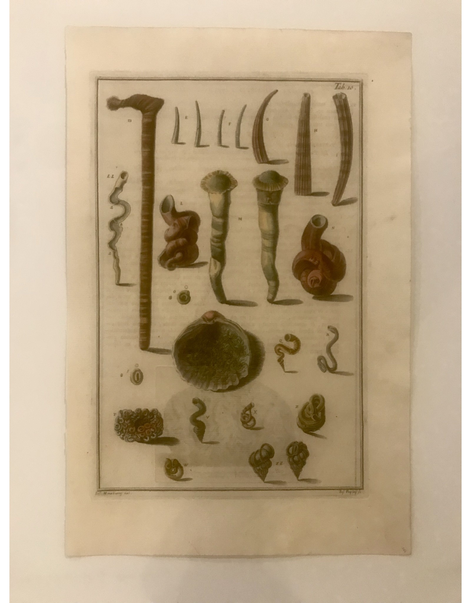 SPV Original educational Lithograph of Sea life in color 1800s