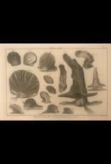 SPV Original Lithograph Black and White Sea life 1700s