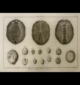SPV Original Black and white Lithograph 1700s