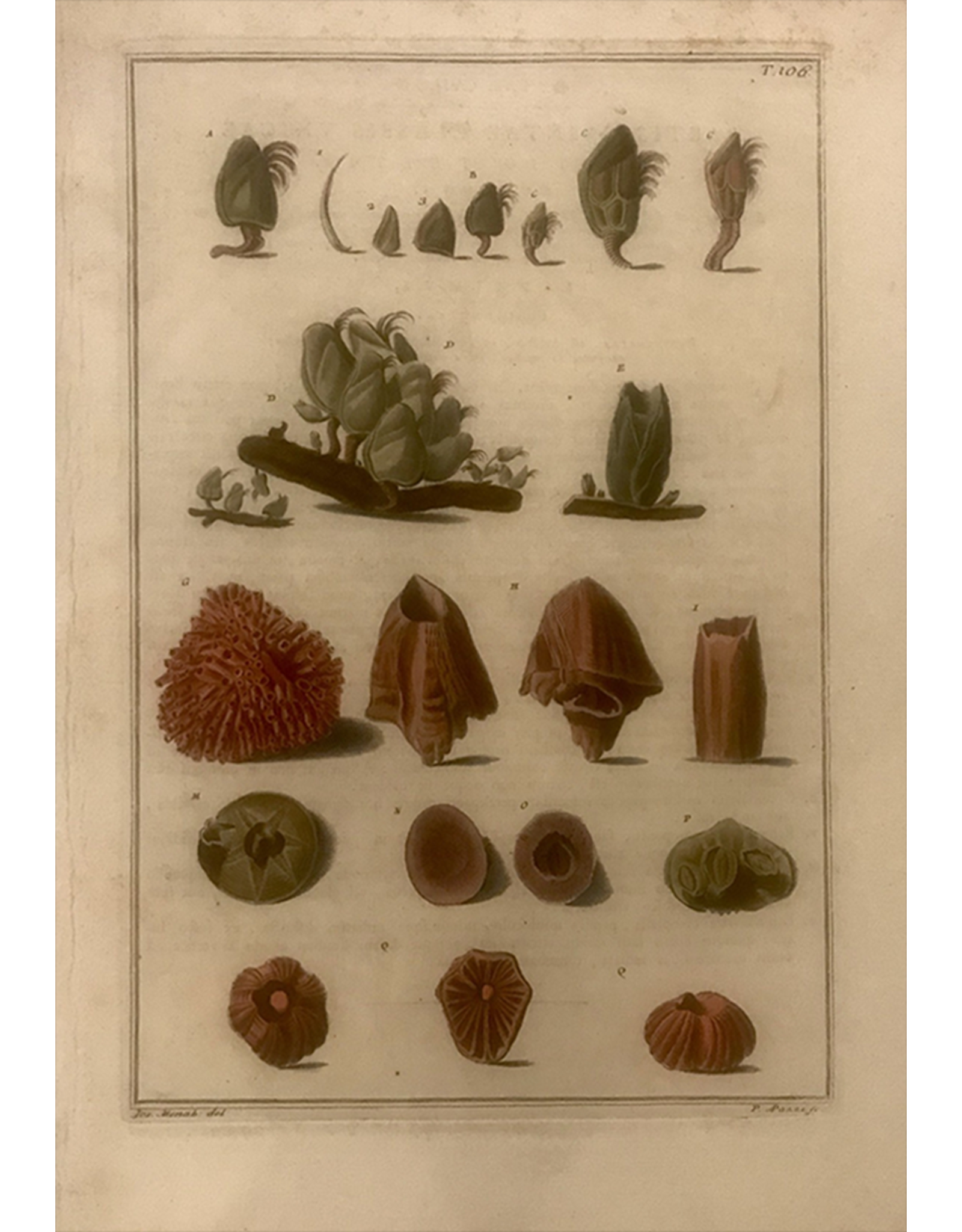 SPV Original Lithograph of Sea life in color