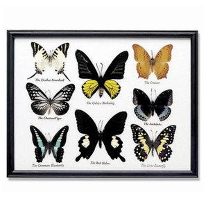 World Buyers 8-Piece Butterfly Collection