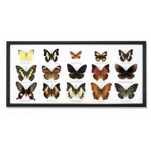 World Buyers 15-Piece Butterfly Collection