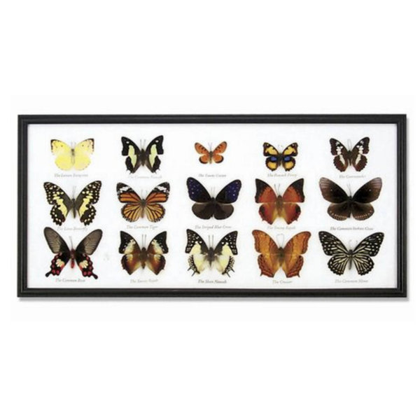 World Buyers Butterfly Collection | 15-Piece
