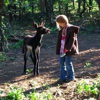 Dulce De Donke Soap|Donkey Milk|Psorigo Cedarwod