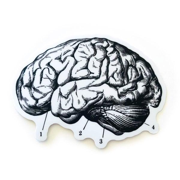 Stickers Northwest Sticker | Brain