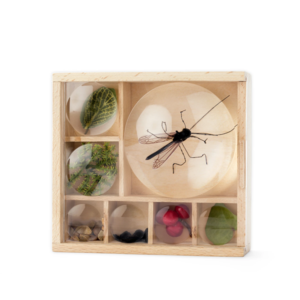 Kikkerland Outdoor Bug Box | Huckleberry