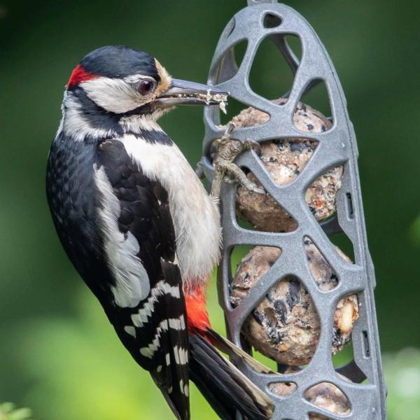 BIDK Home Bird Feeder | Sam | Grey