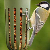 Bird Feeder | Max Green