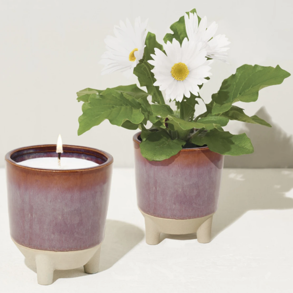 Modern Sprout Candle Kit   Grow and Glow