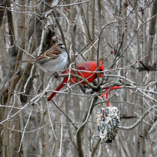 Mr. Bird Bird Seed | Little Heart