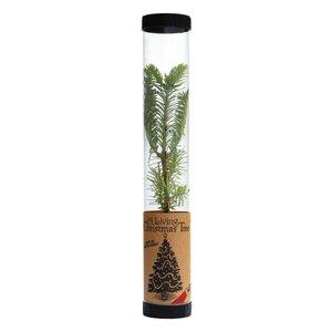 Jonsteen Company Living Christmas Tree | Balsam Fir