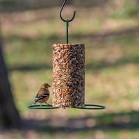 Bird Seed Feeder | Cylinder