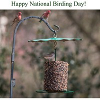 Bird Seed Feeder | Rain Guard Attachment