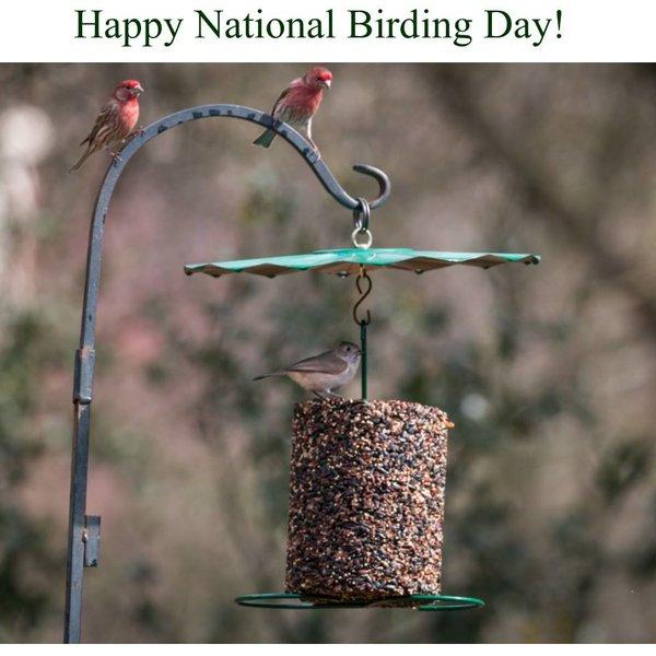 Mr. Bird Rain Guard   Cylinder Feeder