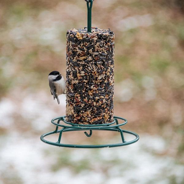 Mr. Bird Bird Seed Cylinder | Small | WildBird Feast
