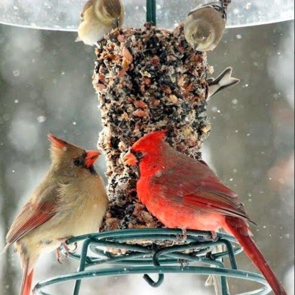 Bird Seed Cylinder   WildBird Feast   Small