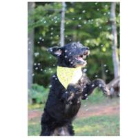 Pet Qwerks Doggy Incredibubbles | Peanut Butter