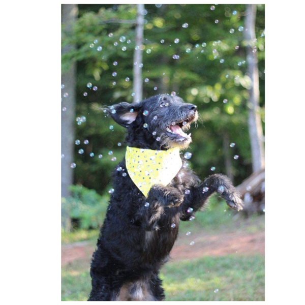 Doggy Incredibubbles | Peanut Butter