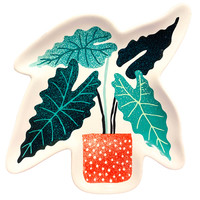 Shaped Dishes | Let it Grow