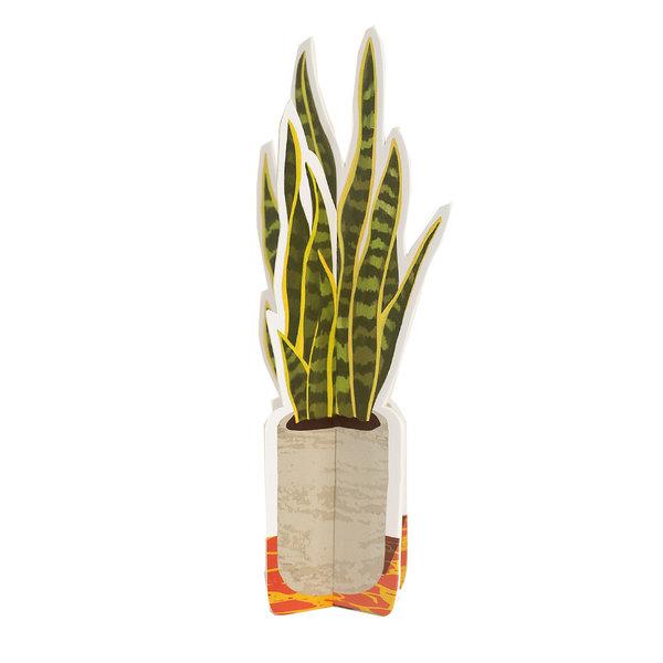 Seltzer Goods Paper Plants | Small
