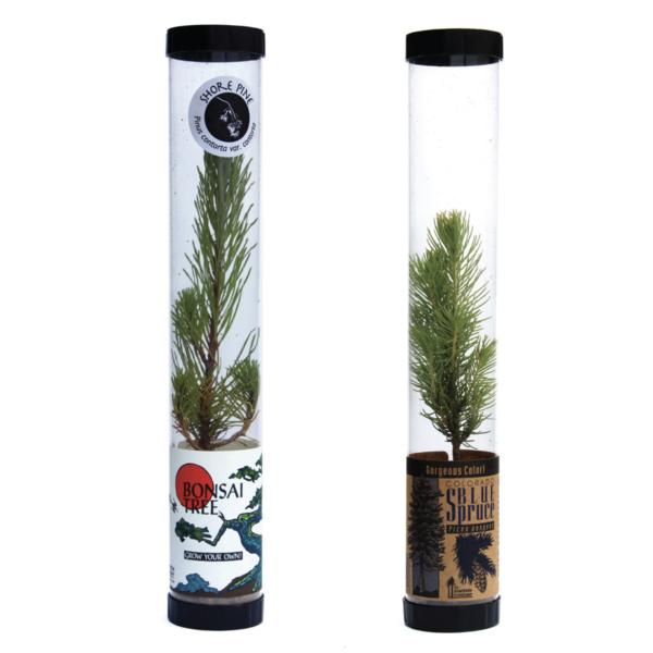 Seedling | Live Tree