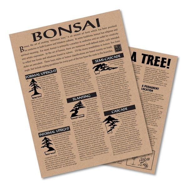 Jonsteen Company Tree Growing Kits
