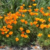 Flower Growing Kits