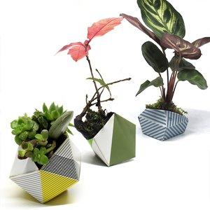 OriBon Planters | Origami
