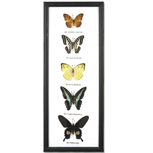 World Buyers Butterfly Collection | 5pc Vertical