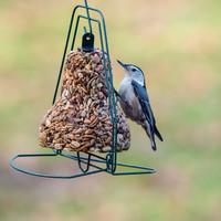 Mr. Bird Bird Seed | Bell Hanger