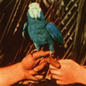 Andrew Bird – Are You Serious LP
