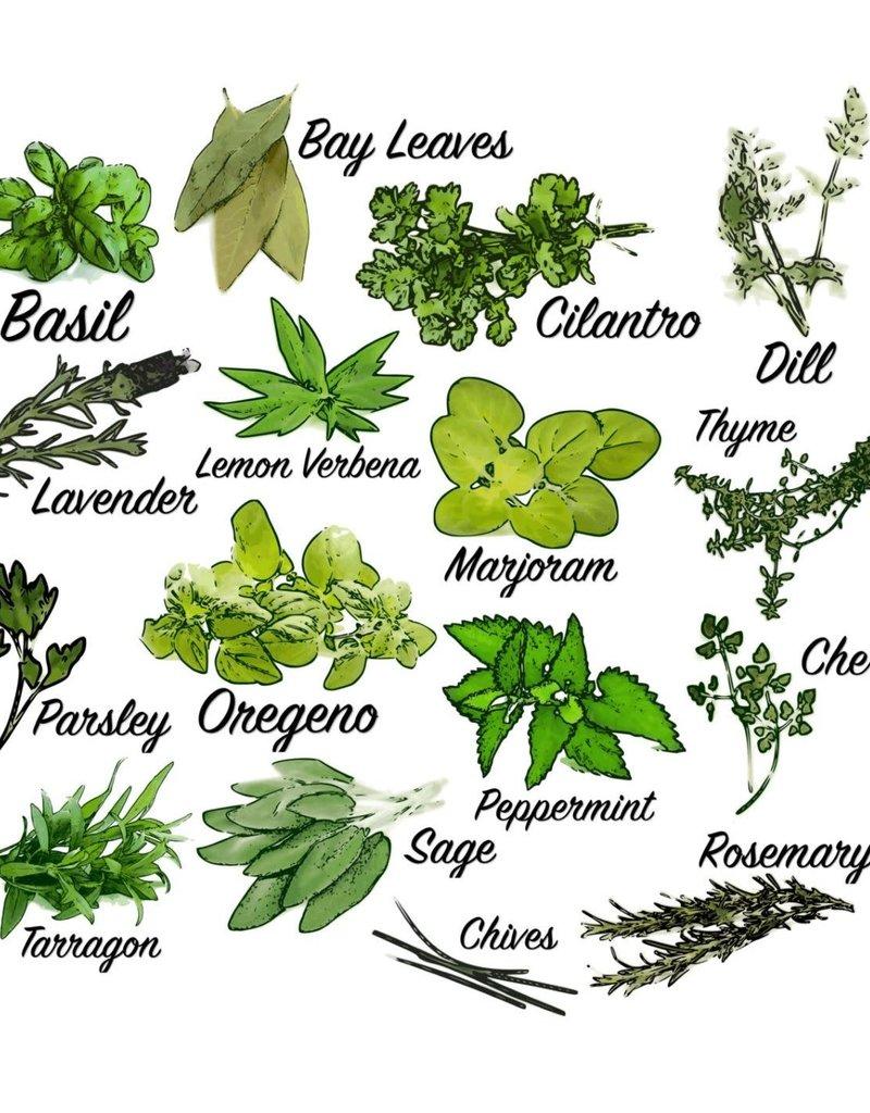 """MARI-MANN HERB FARM HERB PLANT ROSEMARY, HUNTINGTON CARPET 3.5"""""""