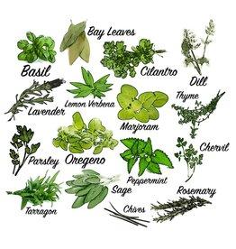 """MARI-MANN HERB FARM HERB PLANT SWEET WOODRUFF 3.5"""""""